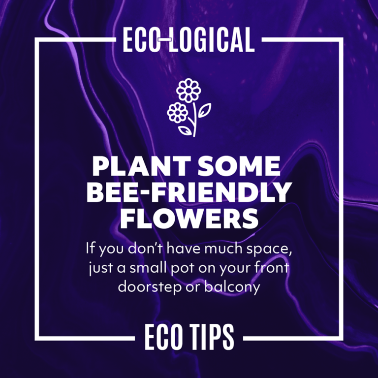 PLANT SOME BEE-FRIENDLY FLOWERS